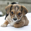 complete replacer puppy dog